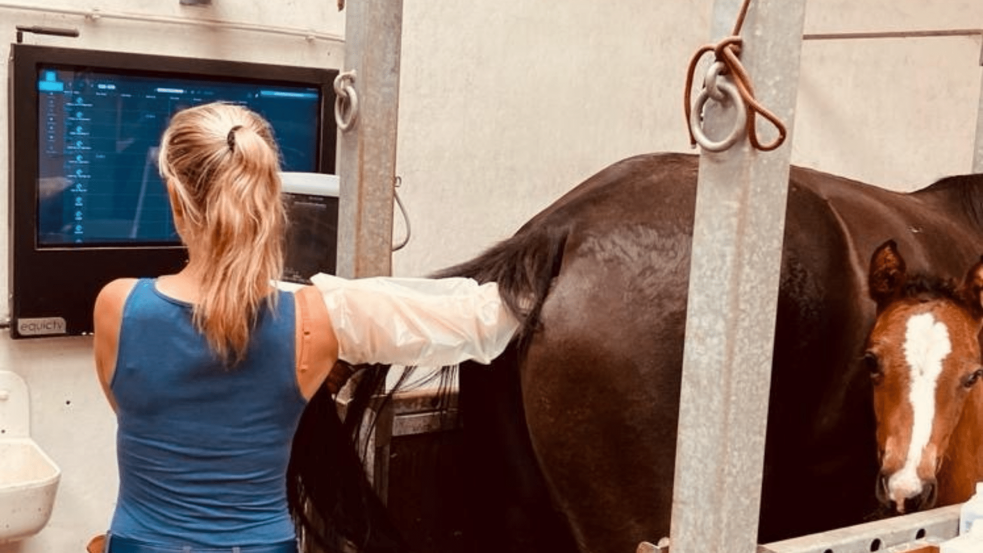 Vet scanning mare and using equicty's digital stable management tool